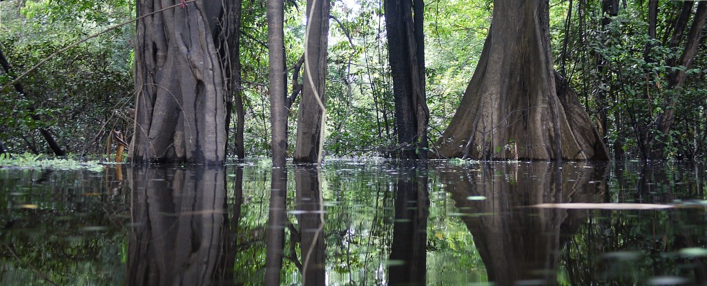 Vazara Flooded forest. Brazil